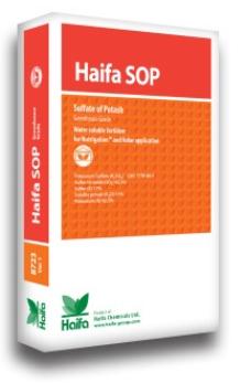 HAIFA SOP( KALI SUNPHAT )