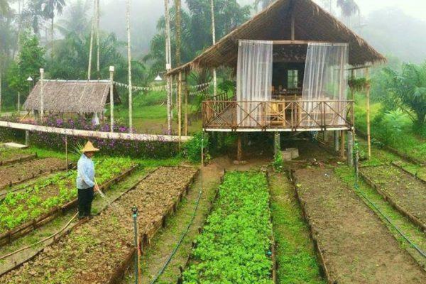mo-hinh-farmstay-dep